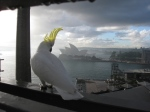 Cockatoo and Opera house